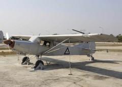 Beagle D5180 Husky